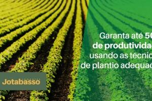 Técnicas adequadas de plantio são responsáveis por até 50% da produtividade da lavoura