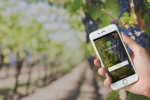 Produtores de uva da Serra gaúcha investem em plataforma de sensoriamento e rastreabilidade