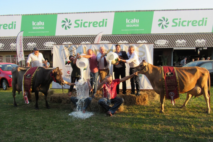 Concurso Leiteiro de Sólidos ressalta a qualidade do leite Jersey