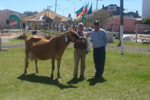 Exposição de Canguçu aponta os melhores exemplares da raça Jersey na região