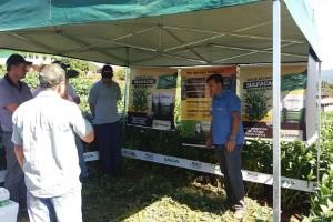 Cooperalfa e SulGesso demonstram benefícios do sulfato de cálcio em Dia de Campo no Paraná
