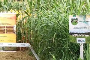 Benefícios do sulfato de cálcio no solo são destaque na Tecnorte 2019