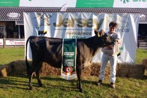 Grande Campeã Fêmea Jovem da raça Jersey é de Salvador do Sul