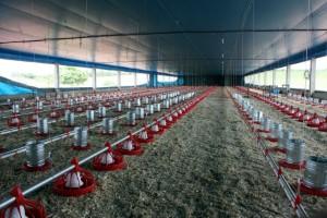 Cresce interesse da pecuária e da avicultura pelos benefícios do sulfato de cálcio
