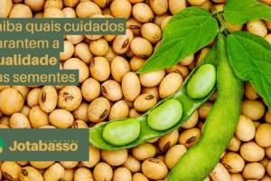 Antes de plantar, confira 7 dicas para preservar o máximo potencial das suas sementes