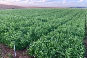 Preparar o solo para o inverno é investimento na safra de verão