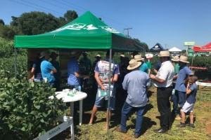 Dias de Campo apresentam alternativas para o equilíbrio químico do solo
