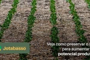 Confira estratégias pela fertilidade do solo que ampliam produtividade no campo