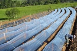 Projeto envolvendo startups leva tecnologia aos agricultores e agiliza serviço de distribuição de alimentos orgânicos