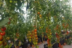Tecnologia de controle e automação dos cultivos aumenta a produtividade e reduz impacto ambiental na produção de alimentos