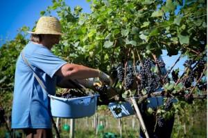 Empresa cria solução para reduzir falta de mão de obra nas colheitas