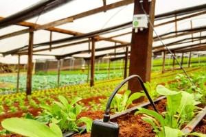 Agricultores têm acesso gratuito à informação tecnológica