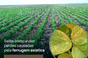 Sucesso da lavoura de soja pode estar no manejo preventivo