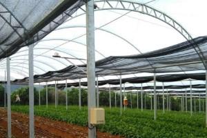 Setor de hortifruti e fruticultura são impulsionados por agricultura 4.0