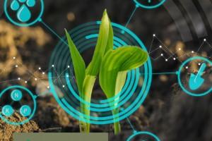 A arte de multiplicar sementes com qualidade