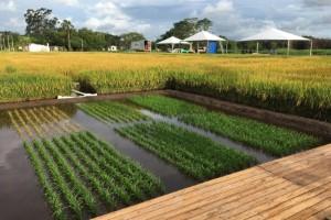 Atentos ao clima e ao mercado, produtores de arroz iniciam mais uma safra