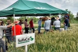 Dia de Campo voltado ao trigo destaca importância do condicionamento do solo