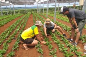 Rastreabilidade pode ser decisiva na valorização de negócios sustentáveis