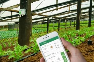 Inteligência Artificial avança no cultivo de frutas e hortaliças