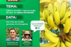 Sulfato de cálcio granulado auxilia produtores de banana a enfrentar os desafios do cultivo