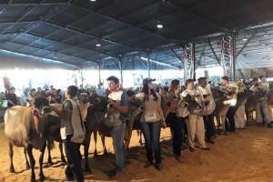 Divulgado o ranking 2018 da raca Jersey No Rio Grande do Sul