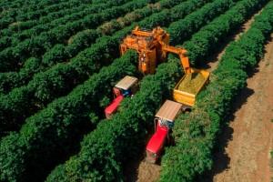 Conheça a tecnologia europeia que ajudou produtores de café a vencerem os desafios climáticos