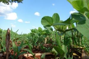 Produtor de soja investe em tecnologia para o solo de olho na produtividade da safra 2020/2021