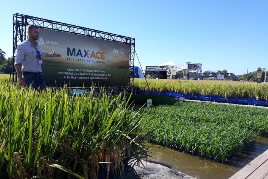 Dia de Campo da RiceTec apresenta tecnologias FullPage e Max-Ace