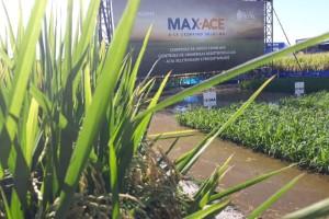 Rotação de tecnologia está resgatando produtividade de lavouras de arroz