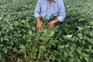 Do plantio à colheita: como é encarado o pós-venda no campo