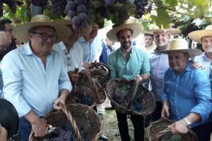 Aberta oficialmente colheita da uva no Rio Grande do Sul